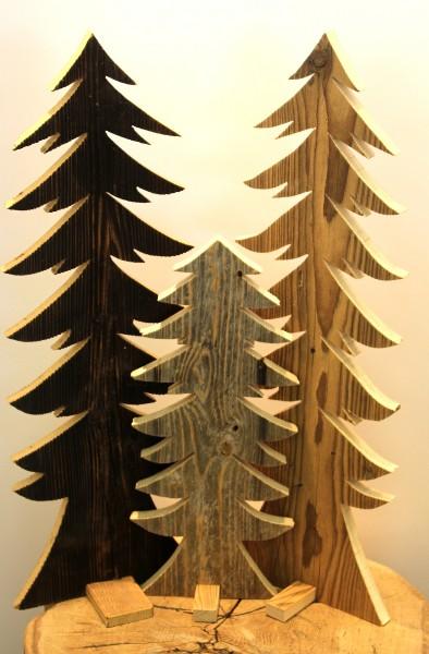 Altholz-Riesenbaum